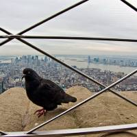 New York nos observa